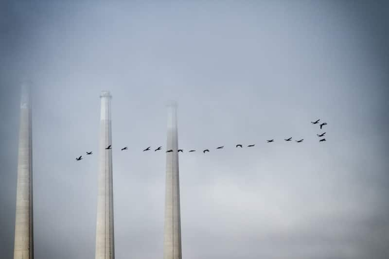 Smoke Stacks | Morro Bay, CA