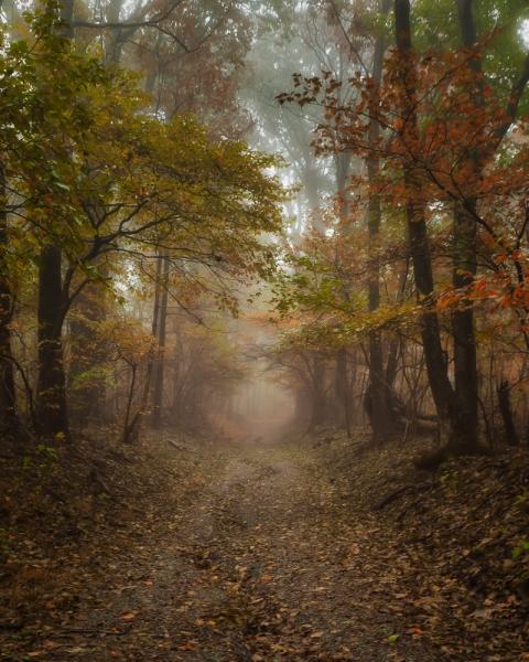 Autumn Hike | Shenandoah National Park | Virginia