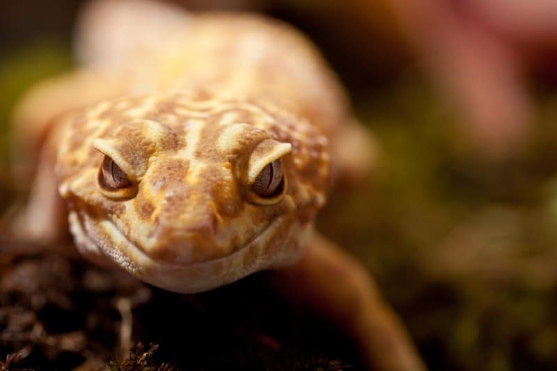 A Very Curious Lizard