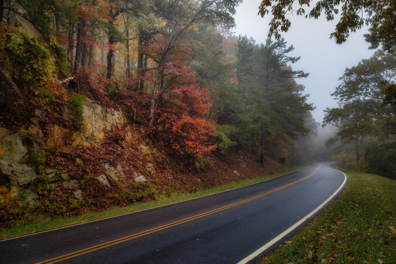 Fall Colors on a Foggy Morning | Skyline Drive | Shenandoah National Park | Virginia