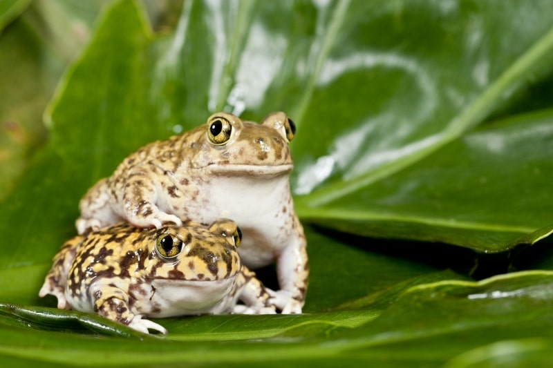 Friendly Toads