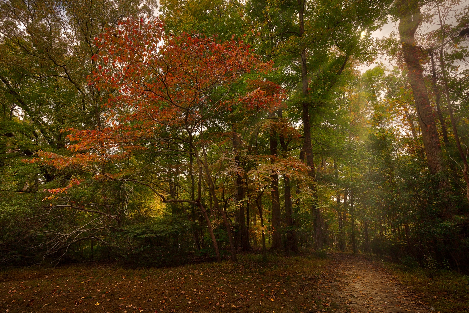 Fall Colors | Mariner's Park | Newport News | Virginia