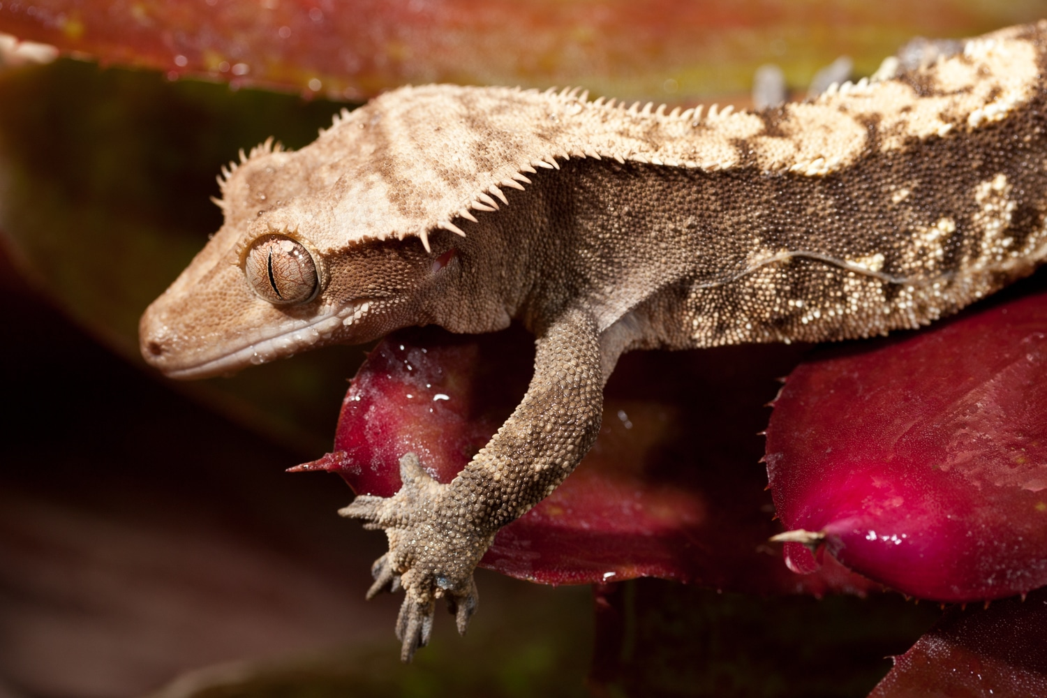 Lizard Relaxing on a Red Plant