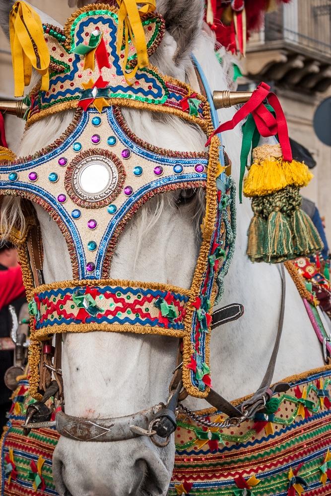 Sicilian Festival Horse | Sagra del Carciofo di Niscemi | Sicily | Italy
