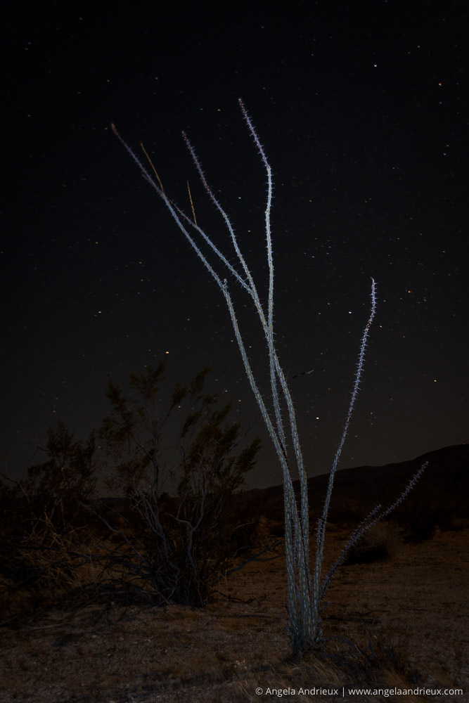 Light Painted Ocotillo | Anza Borrego Desert State Park | Night Sky Stars