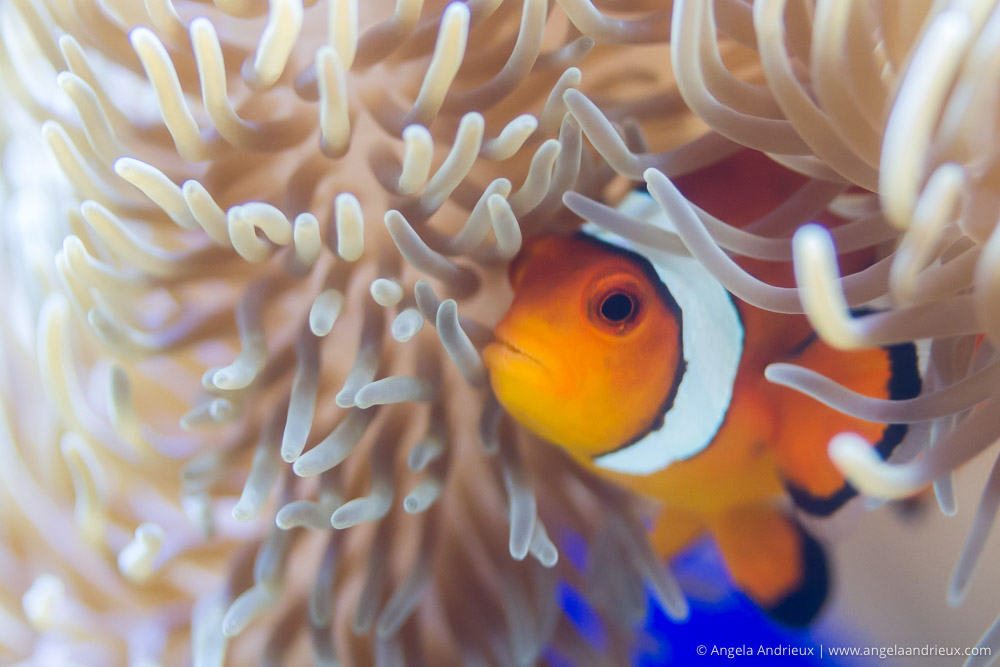 Anemone & Clown Fish | Finding Nemo | Birch Aquarium | La Jolla, CA