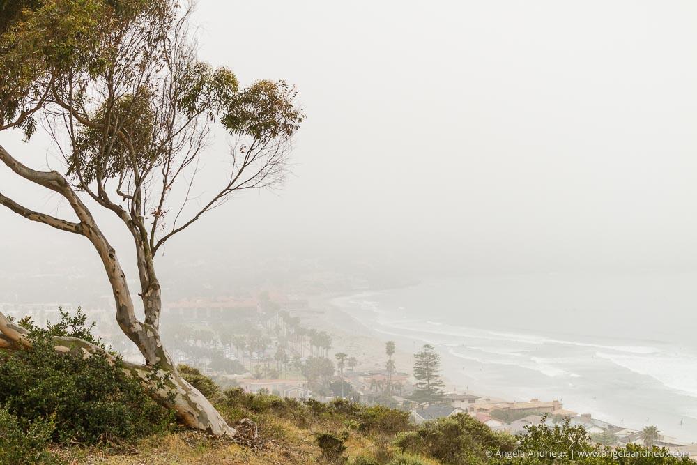 The foggy view from Birch Aquarium | La Jolla, CA