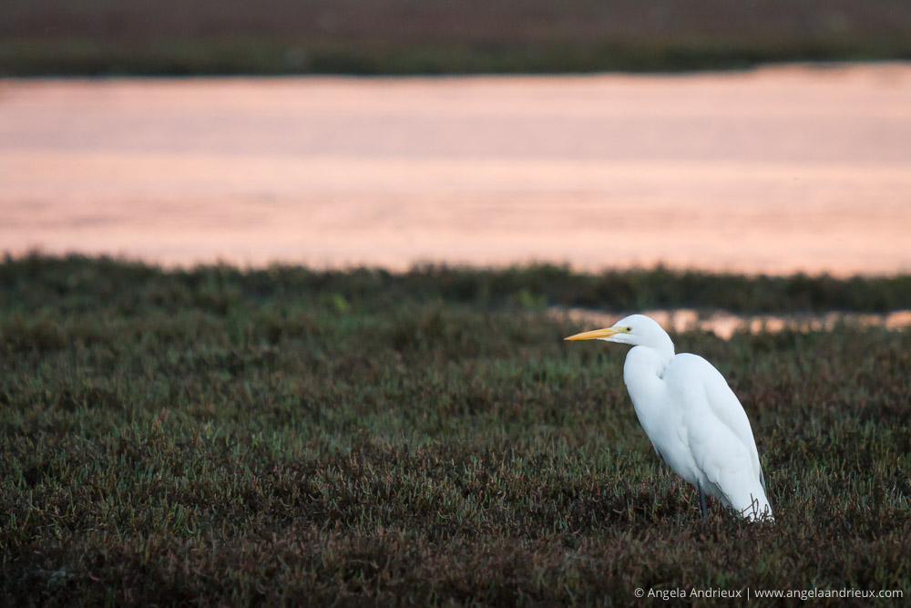 Heron Egret | Sunrise | Morro Bay, CA | California Photo Festival | Thirty Days of Thanksgiving
