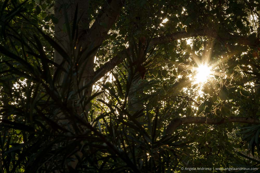 Sunrise through the trees | Santee, CA