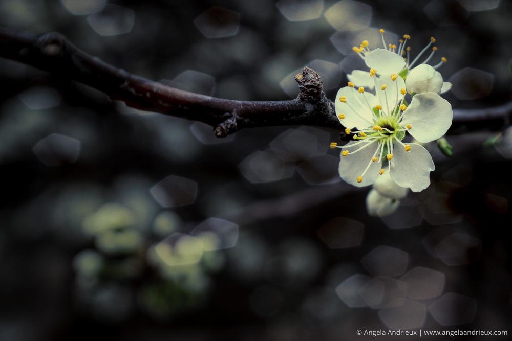 Flower Blossom   Sedona, AZ   Topaz Texture Effects