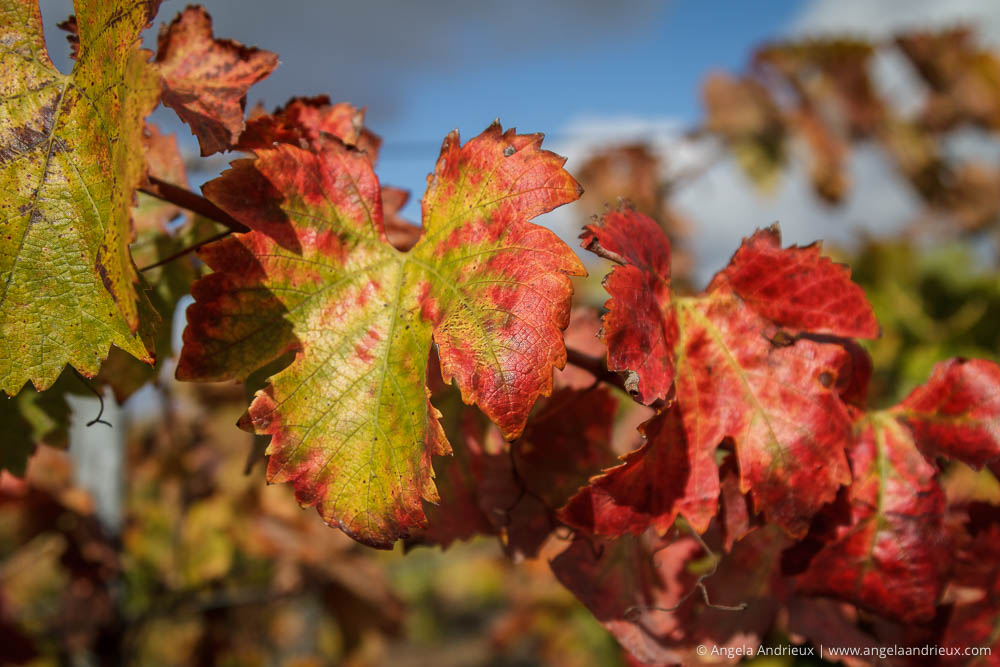 Edna Valley | San Luis Obispo, CA | Wine Country Vin