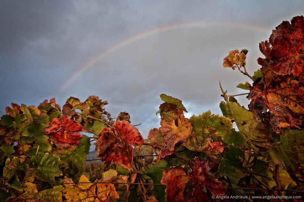 Rainbow | Edna Valley | San Luis Obispo, CA | Wine Country Vin
