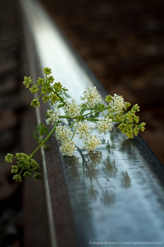 Top 10 Photographs of 2015 | Flowers & Steel | Edna Valley | San Luis Obispo, CA