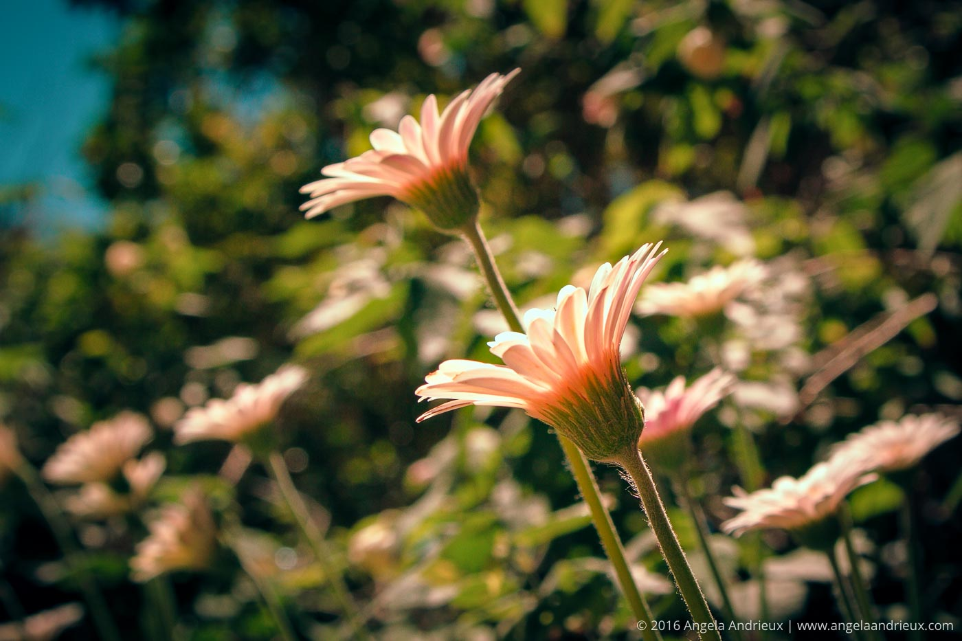 Flower | Balboa Park | San Diego, CA | Processed with Topaz ReStyle