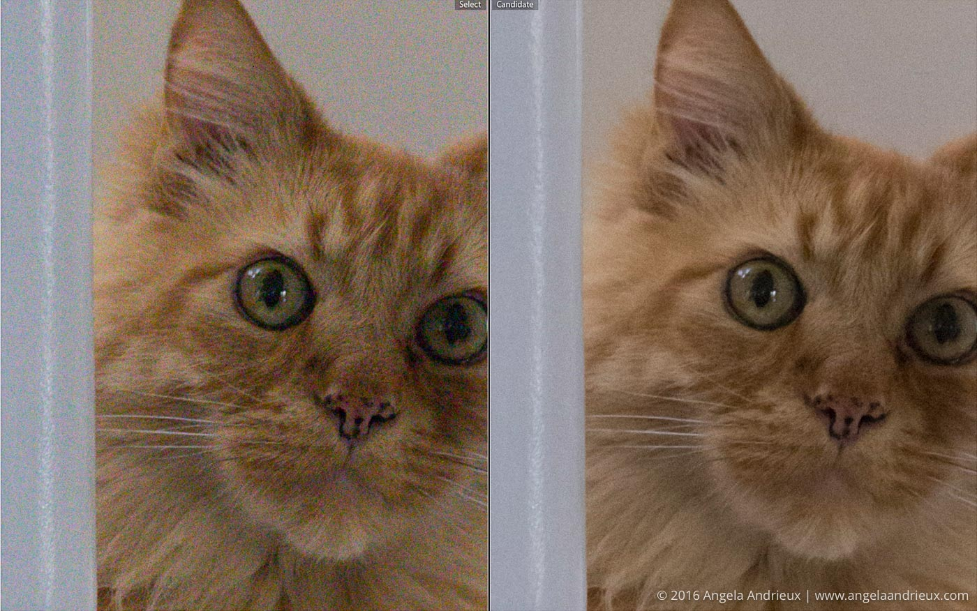 Noise_Reduction_Comparison_RAW_vs_Lightroom_Pumpkin_Cat
