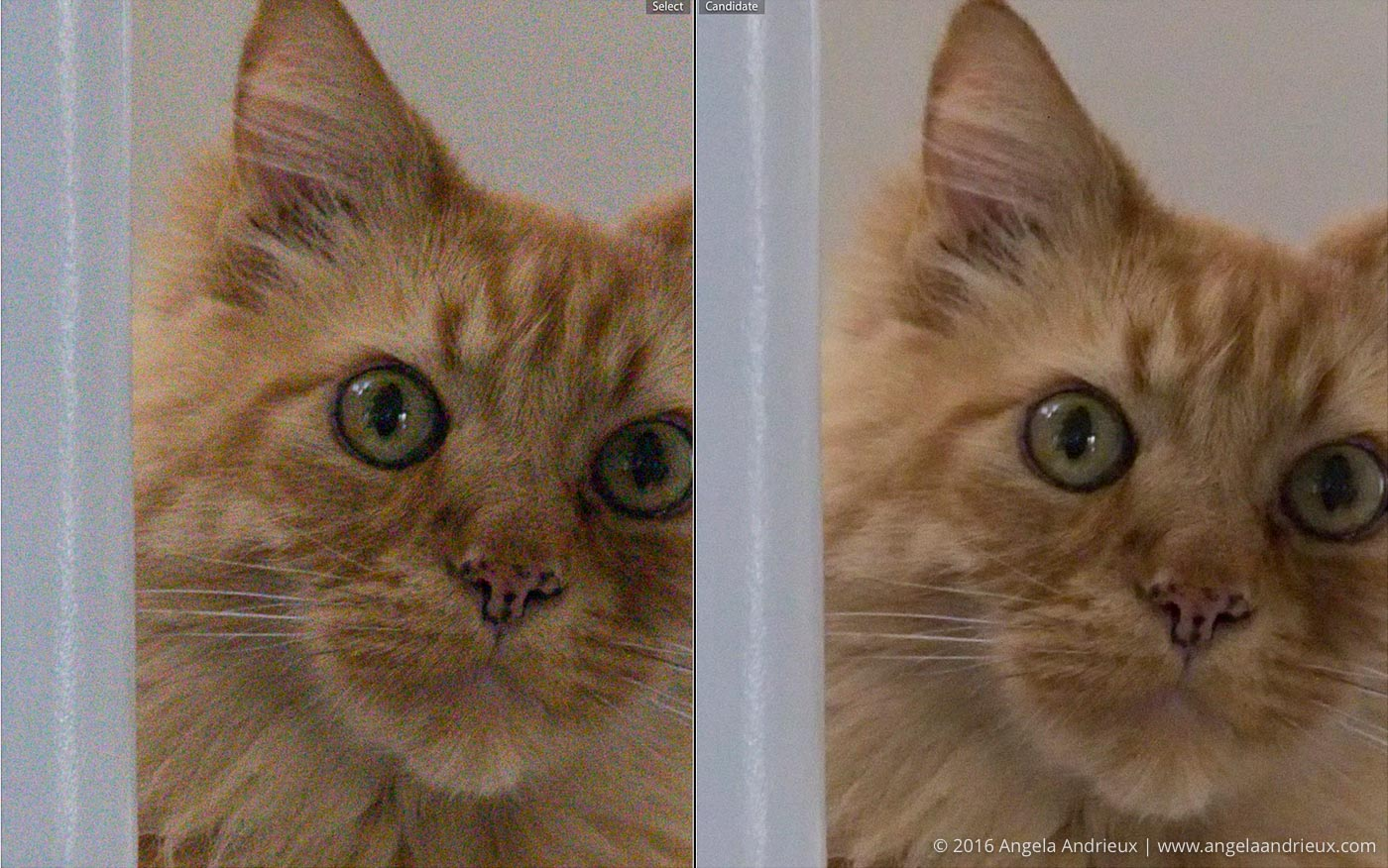 Noise_Reduction_Comparison_RAW_vs_Nik_Dfine_Pumpkin_Cat
