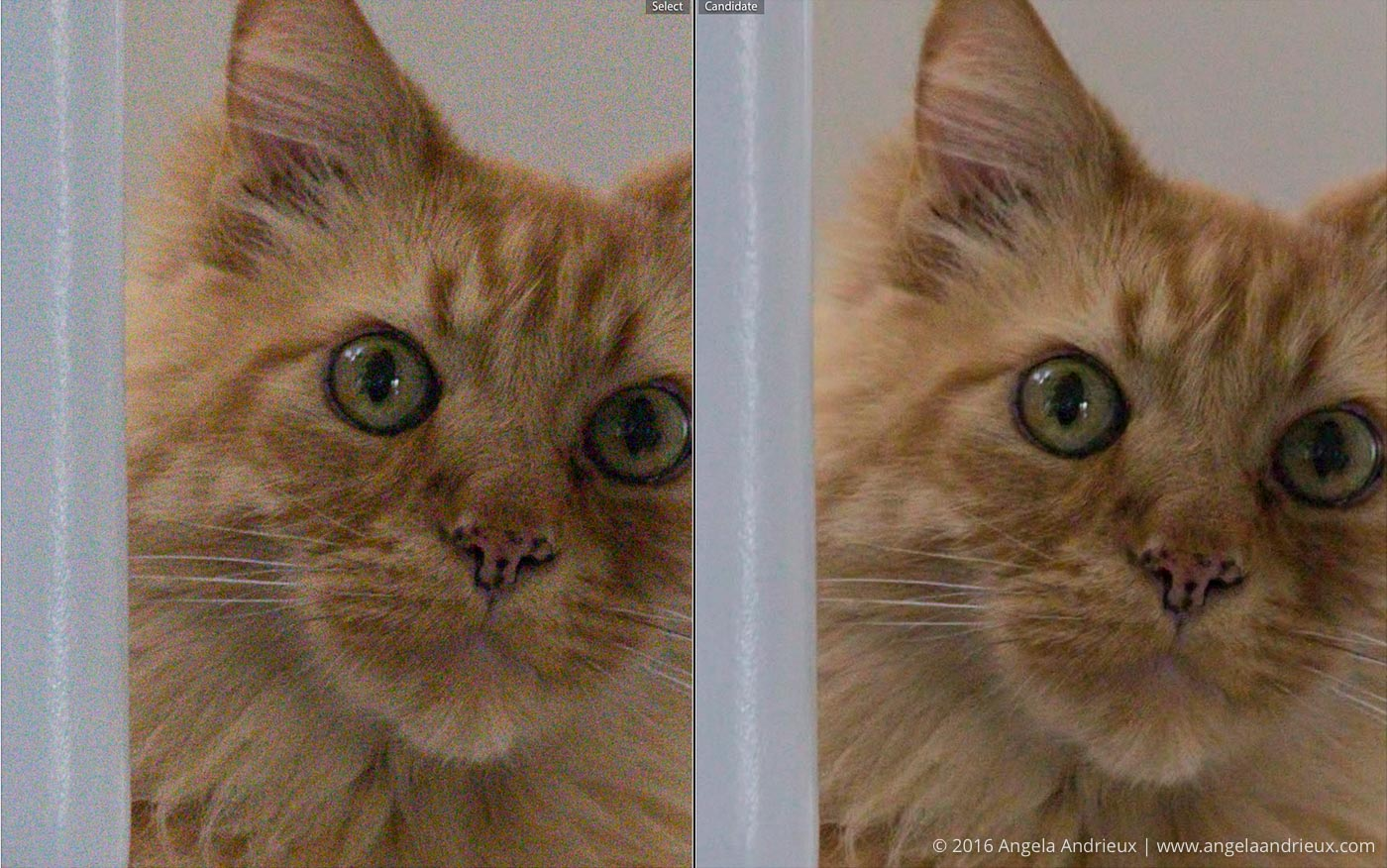 Noise_Reduction_Comparison_RAW_vs_Topaz_DeNoise_Pumpkin_Cat