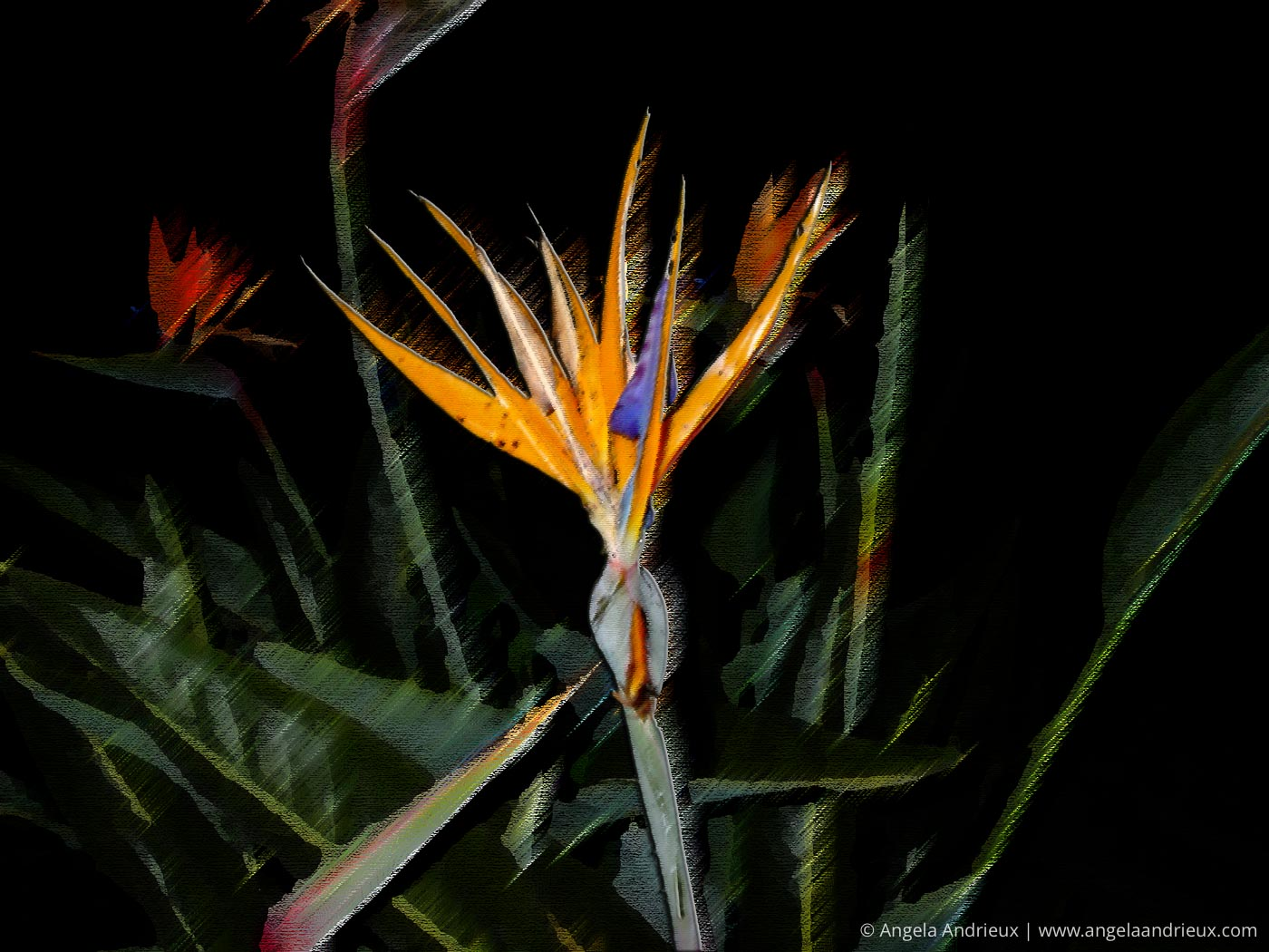 Bird of Paradise | Another of my early attempts at Digital Photo Art