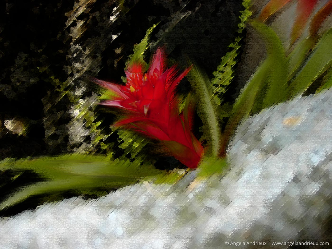 Bromeliad | One of my early attempts at Digital Photo Art