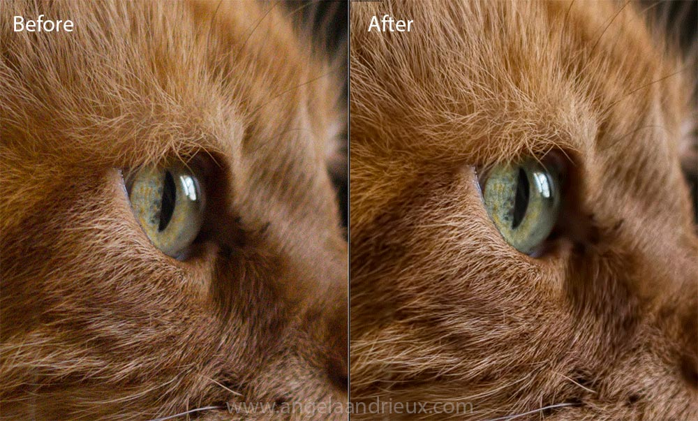 Topaz_Denoise_Before_After