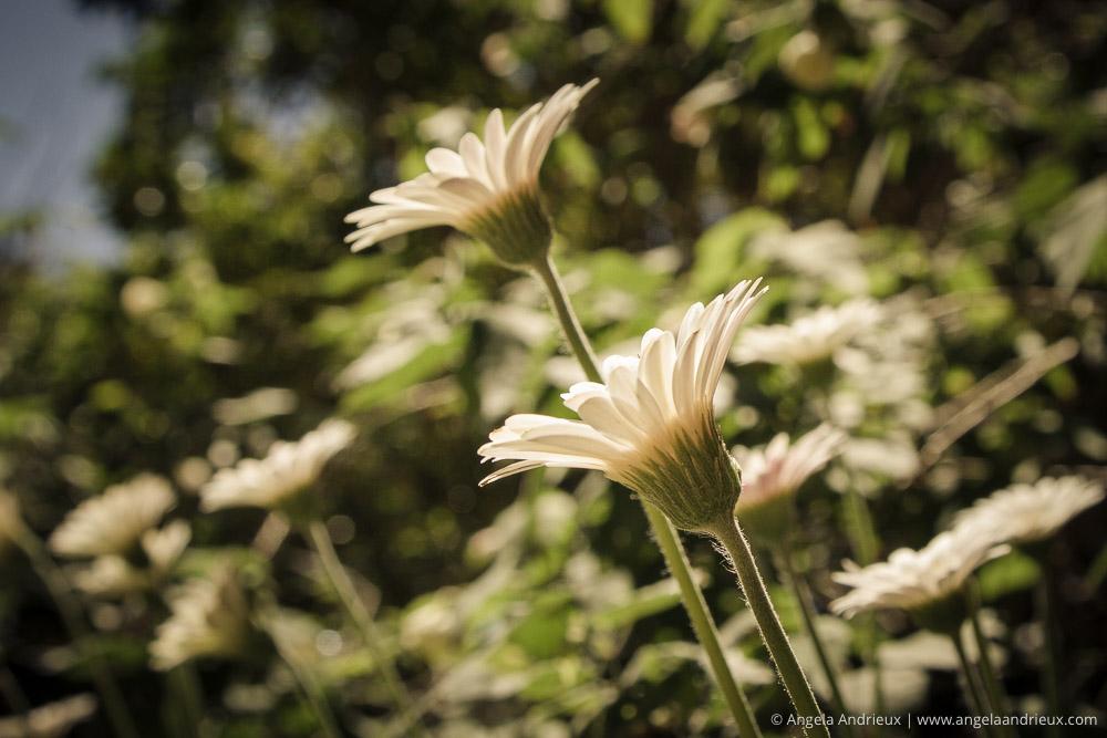 flowers-balboa-park-san-diego