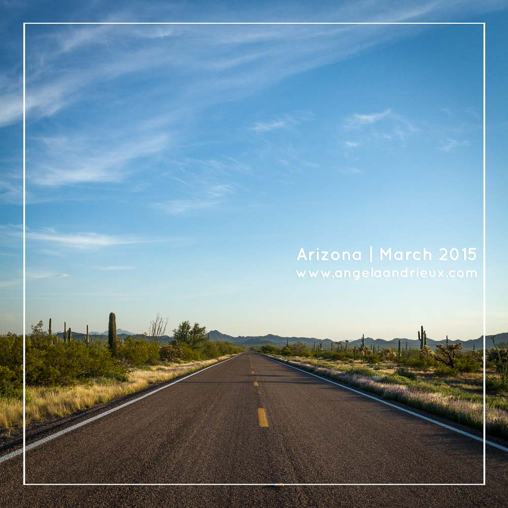 Arizona Road Trip 2015 | Organ Pipe Cactus Road