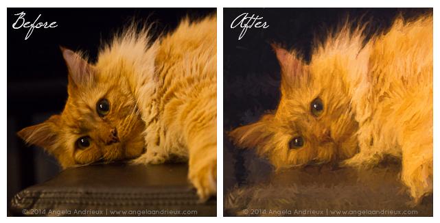 pumpkin_cat_topaz_impression-before-after-comparison