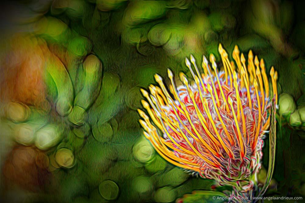 Topaz Glow | Flower Macro