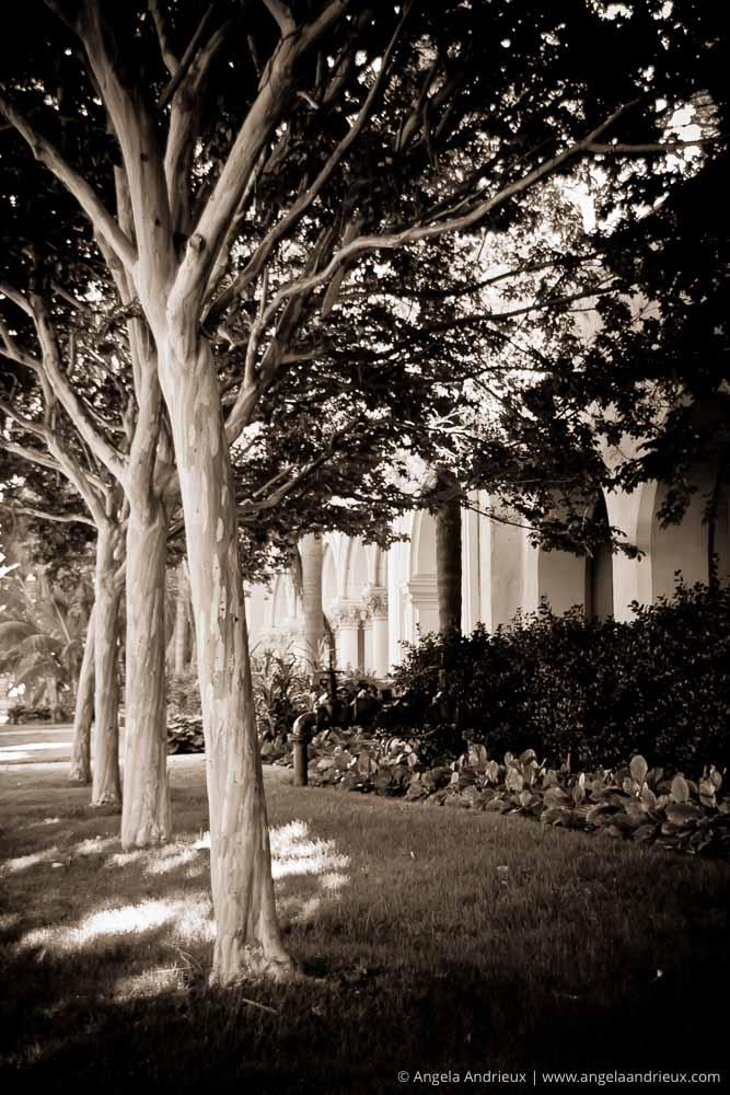 Row of Trees | Balboa Park | San Diego, CA | Scott Kelby Worldwide Photo Walk 2011