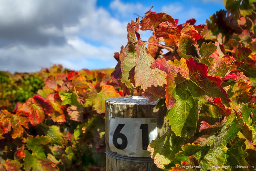 Edna Valley, CA Wine Country | Vineyard Fall Colors | Aurora HDR 2017