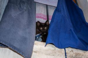 Kitten peeking through curtains | Ragusa Ibla | Sicily | Italy | Scott Kelby Worldwide Photo Walk 2010