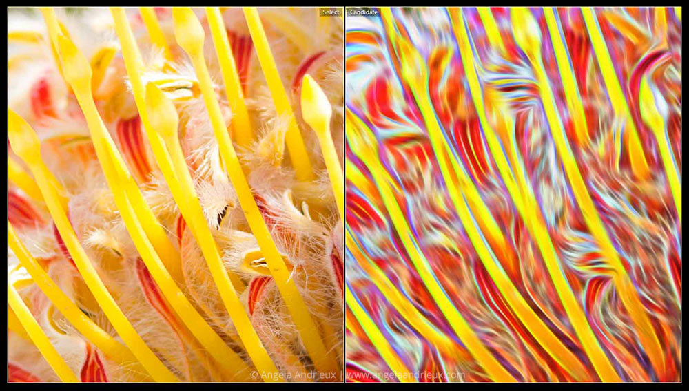 Topaz Glow | Flower Macro | Detail Before & After
