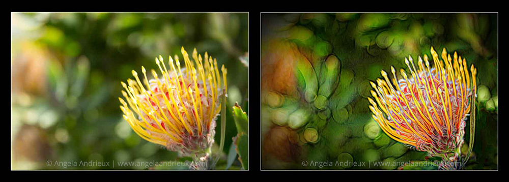 Topaz Glow | Flower Macro | Before & After