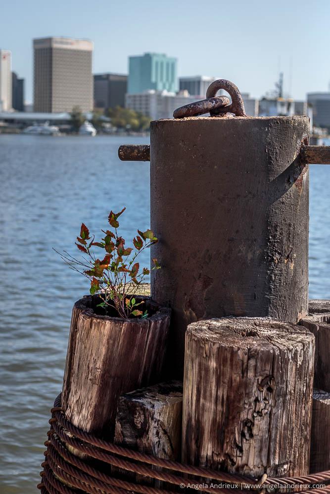 500px Global Photo Walk   Portsmouth, VA   Plant Growing on Pylon   Norfolk Cityscape Background