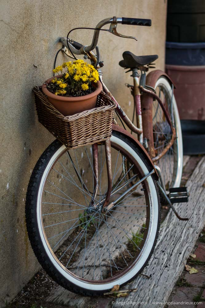 Simple Pleasures | Old Bicycle with Flowers in the Basket | Menghini Winery | Julian, CA