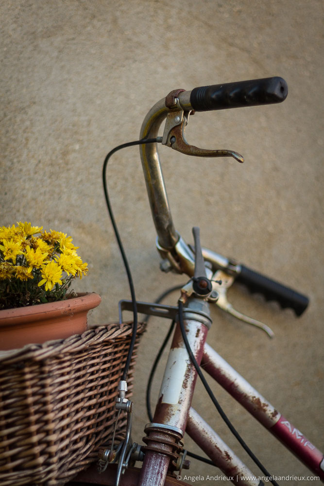 Old Bicycle with Flowers in the Basket | Menghini Winery | Julian, CA