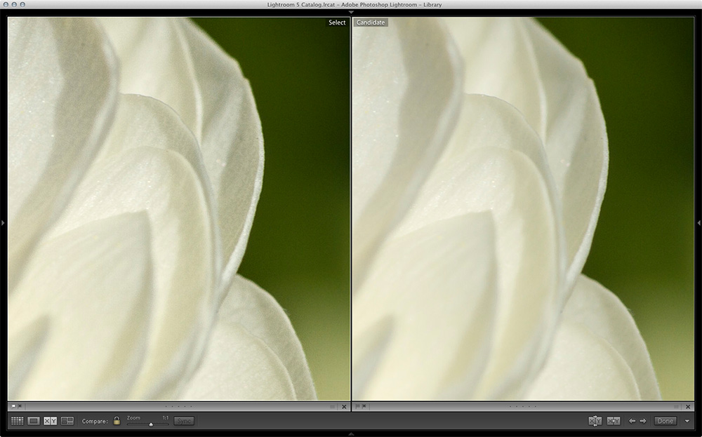 Before and After Topaz Detail | How to create tack sharp photos with Topaz Detail