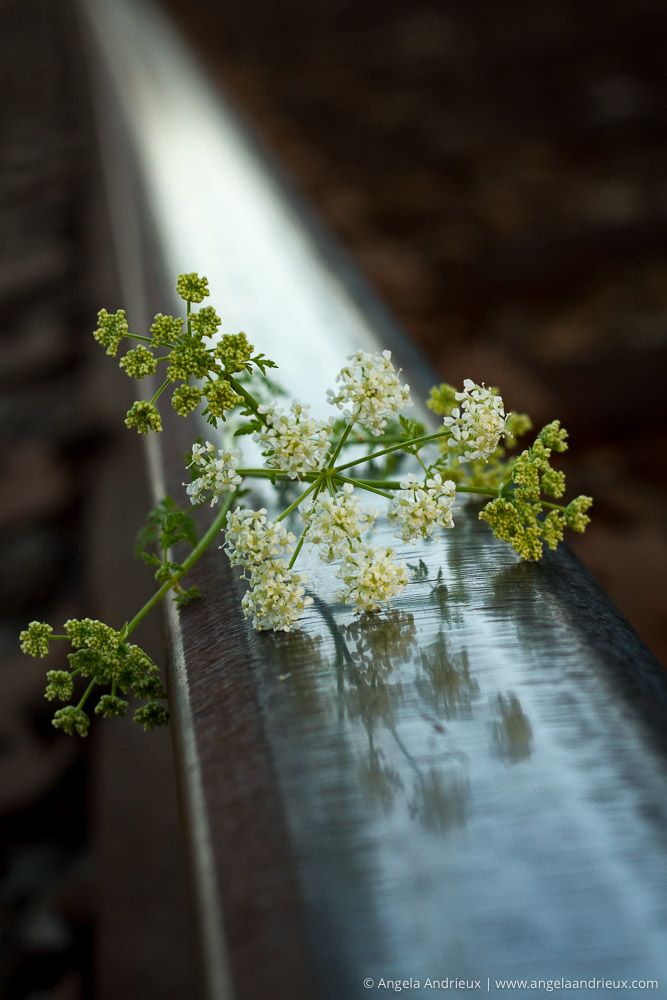 Flowers & Steel | Edna Valley | San Luis Obispo, CA