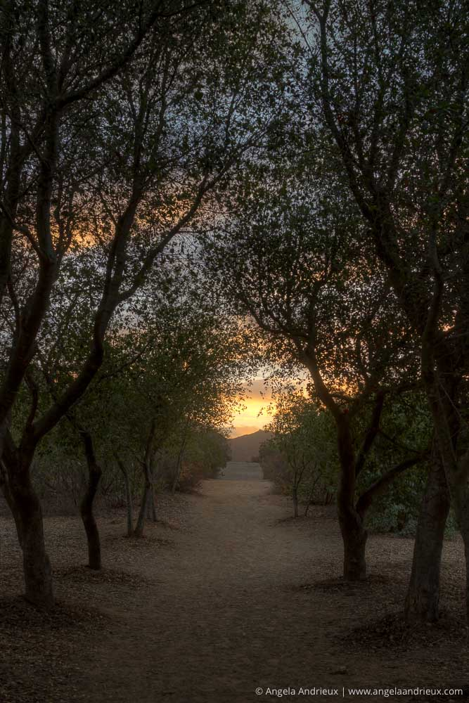 Iron Mountain Sunrise | Tree Tunnel | Poway, CA