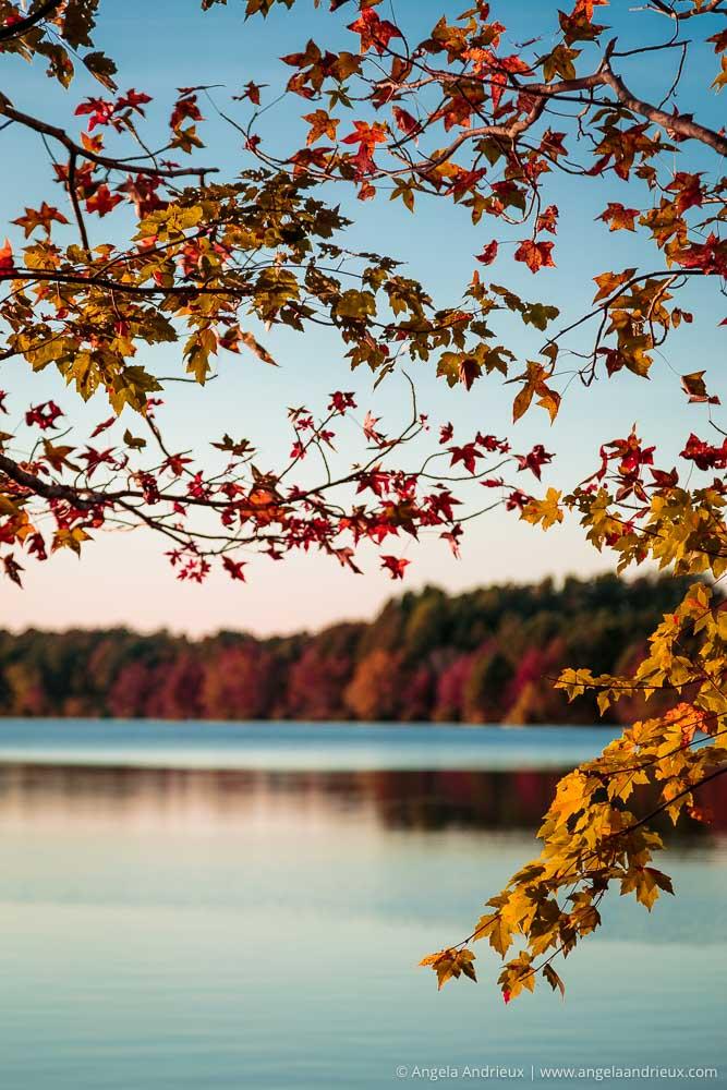 Fall Leaves at Oak Grove Lake Park | Chesapeake, VA