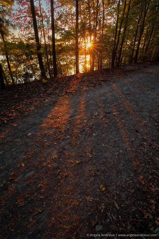 Sunburst through the trees at Oak Grove Lake Park in Chesapeake, VA