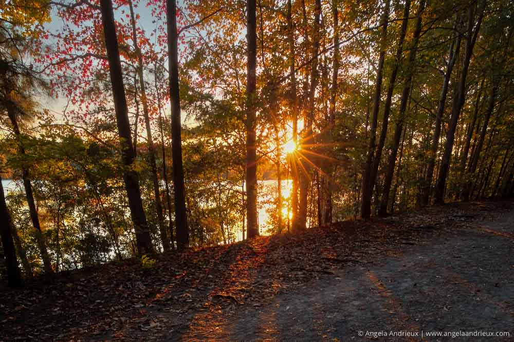 Sunburst through the trees at Oak Grove Lake Park in Chesapeake, VA