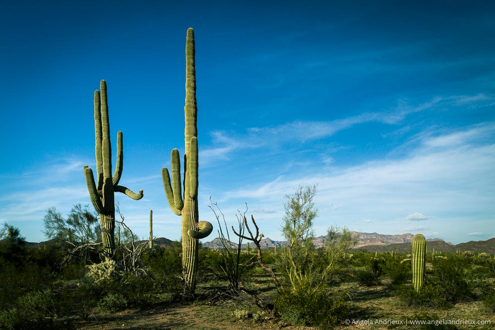 Organ Pipe Cactus National Monument | Arizona