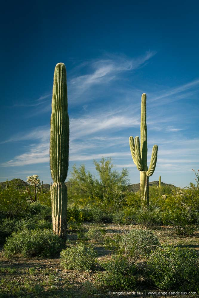 Organ Pipe Cactus National Monument | Arizona