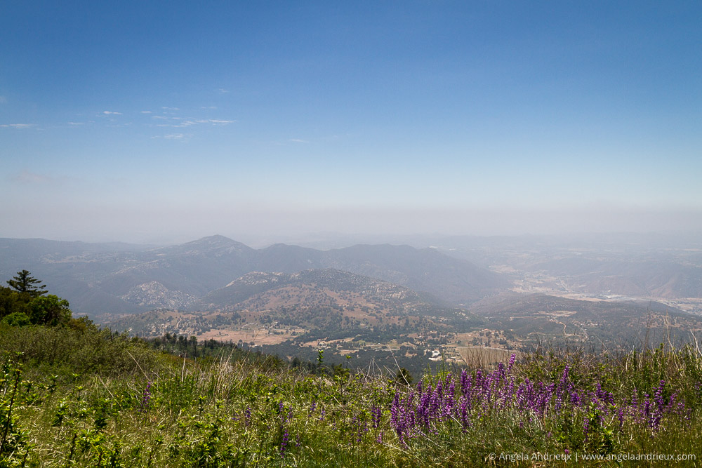 Lupines and the view from Palomar Mountain | Rural San Diego County