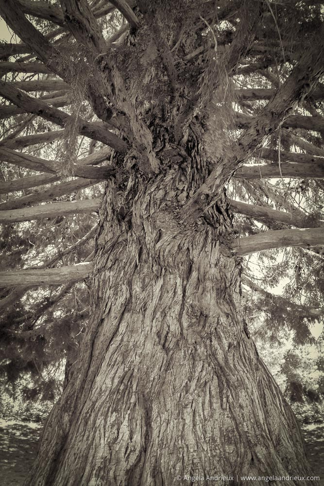 Tree near the Palomar Observatory | Rural San Diego County