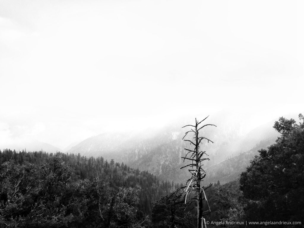 San Bernardino Mountains and Trees in the Mist and Fog in Black and White on the way to Big Bear Lake