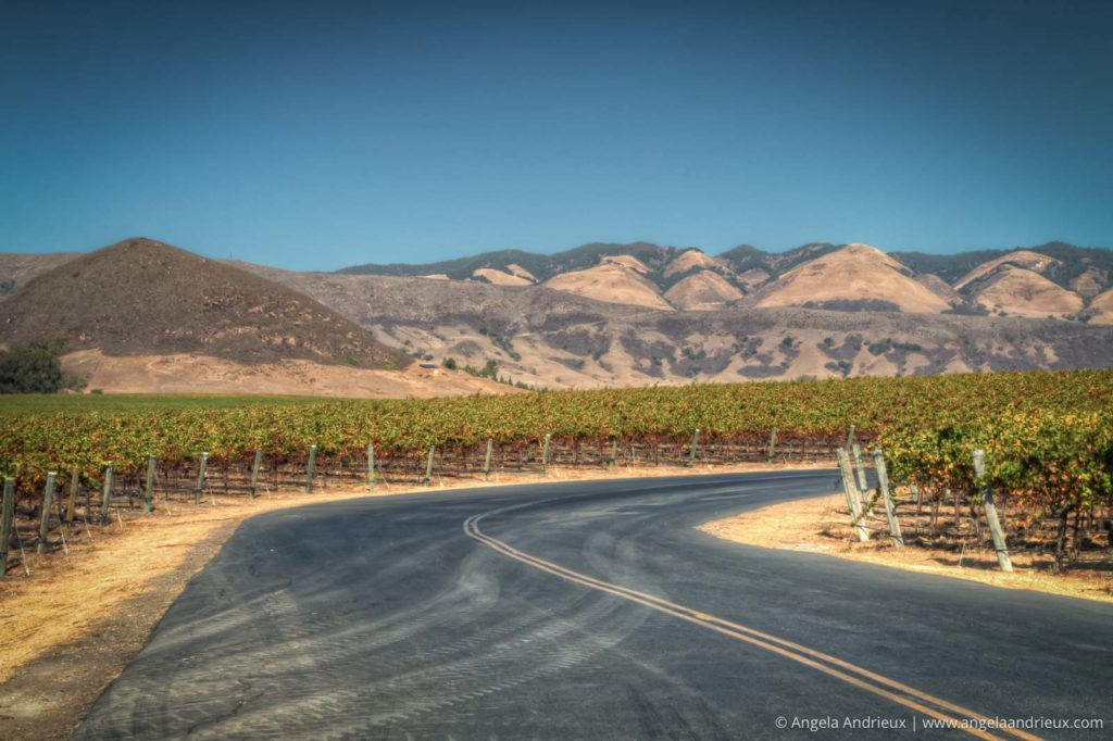 Entering Tolosa Winery | Edna Valley | San Luis Obispo, CA