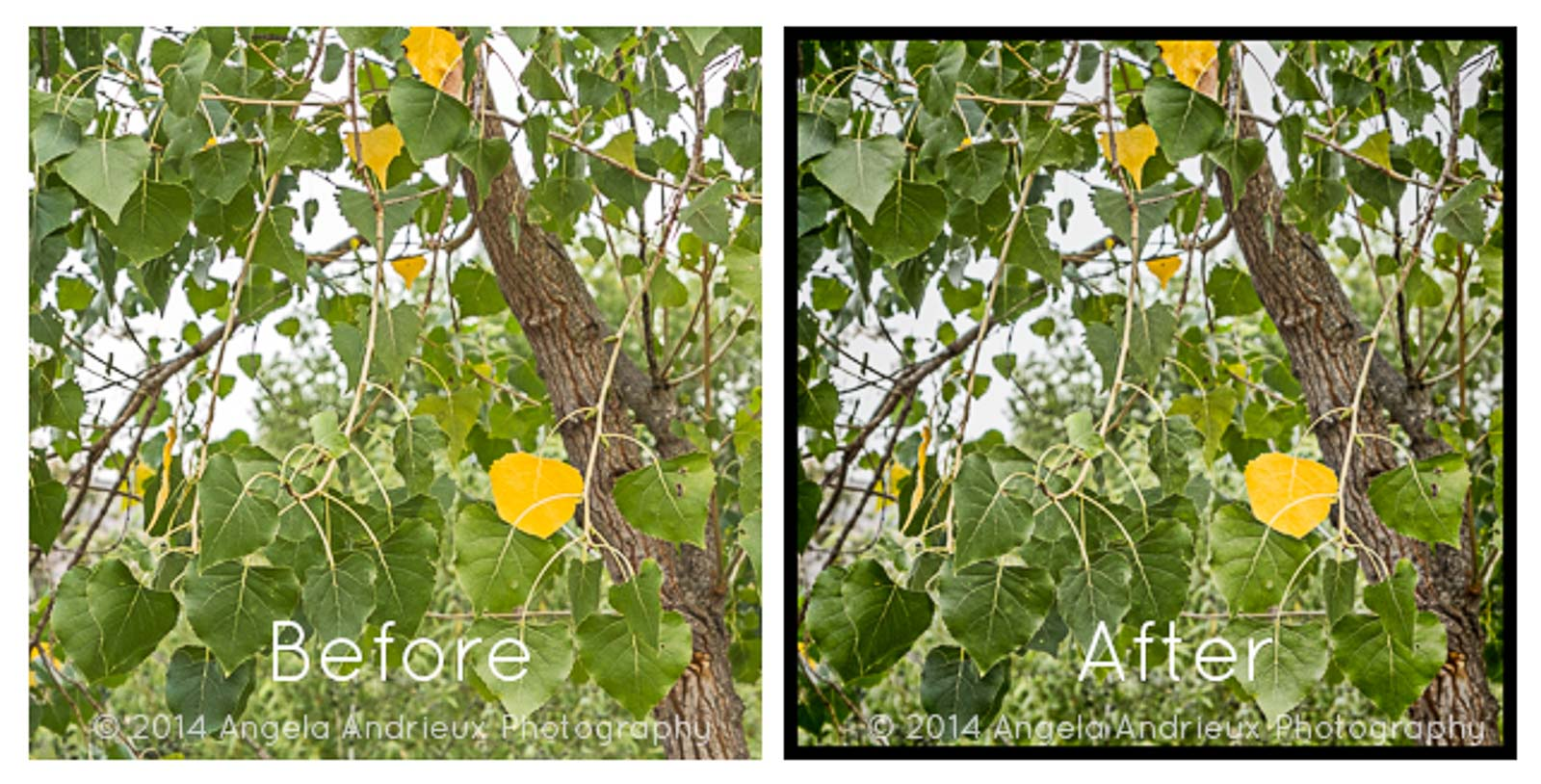 Yellow Fall Leaves | Mission Trails | San Diego, CA | Before and After Topaz Adjust