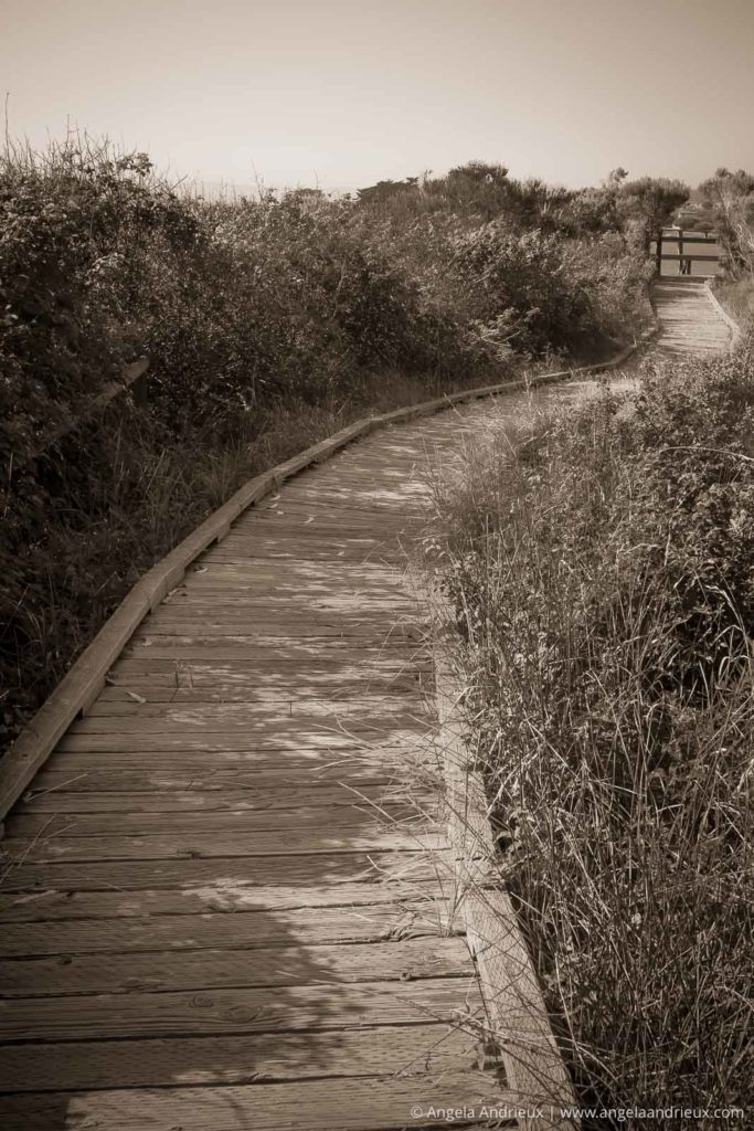 The Path to Solitude | Sweet Springs Nature Preserve | Baywood Park | Los Osos, CA